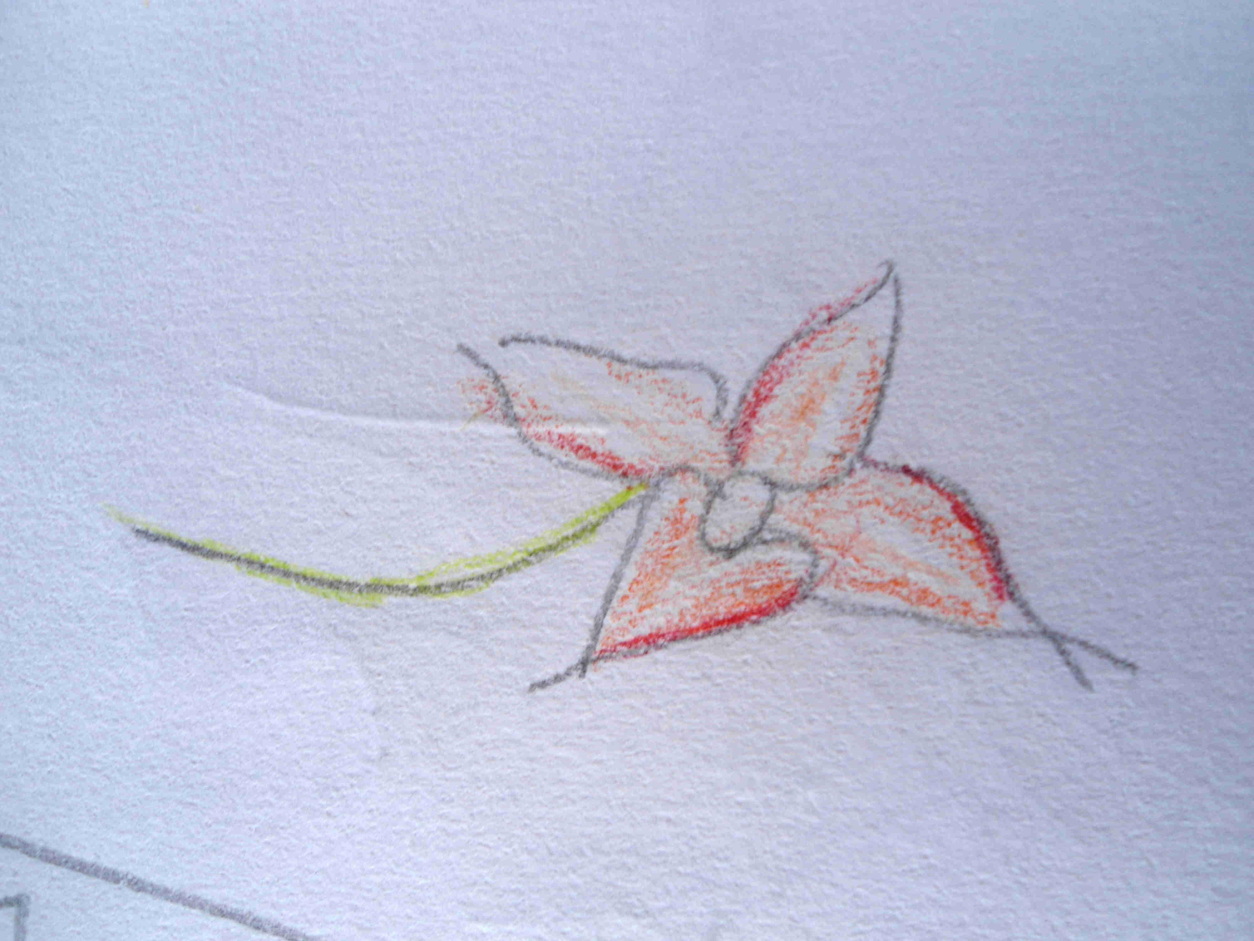 smangele_flower